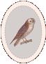 Logo-Hiboux