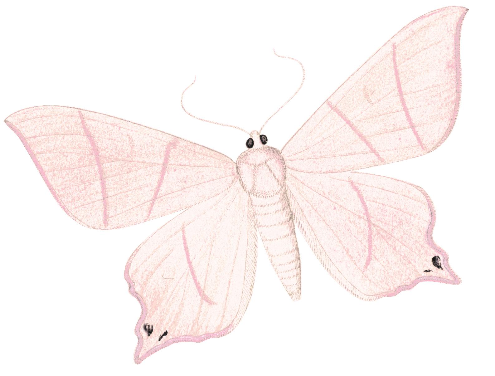 papillon-jaune-orange